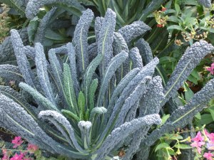 anticancer kale and alcohol