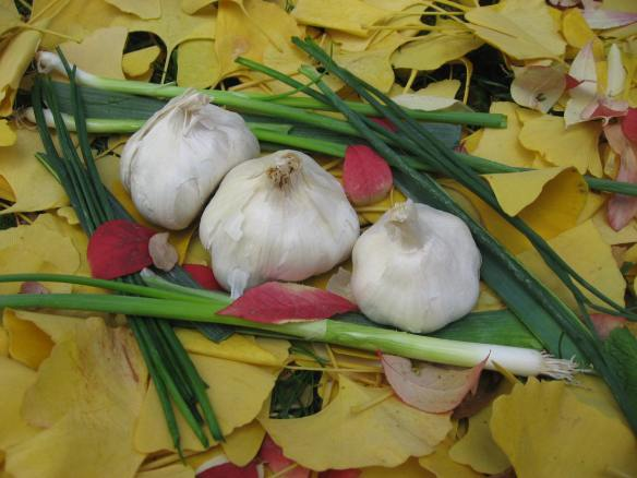 anti cancer properties of garlic