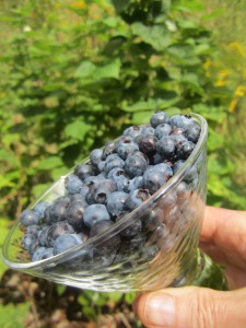 anti-cancer blueberries