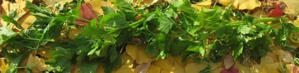 anti-cancer parsley