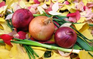 onions and anti-cancer